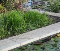 Осока пальмолистная (купить Carex muskingumensis)